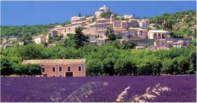 Lavender Town, Provence, France