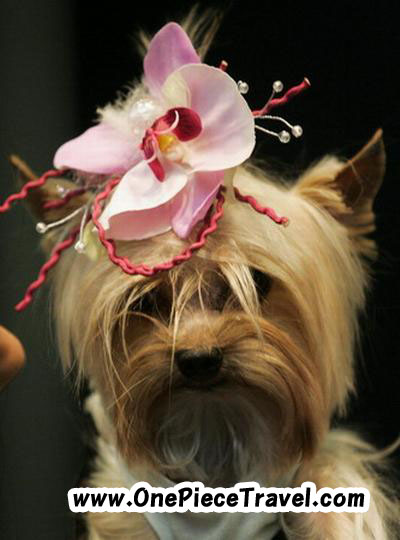 Pets Fashion Week in Moscow