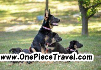 LOS ANGELES – Five clones of a search and rescue dog which helped