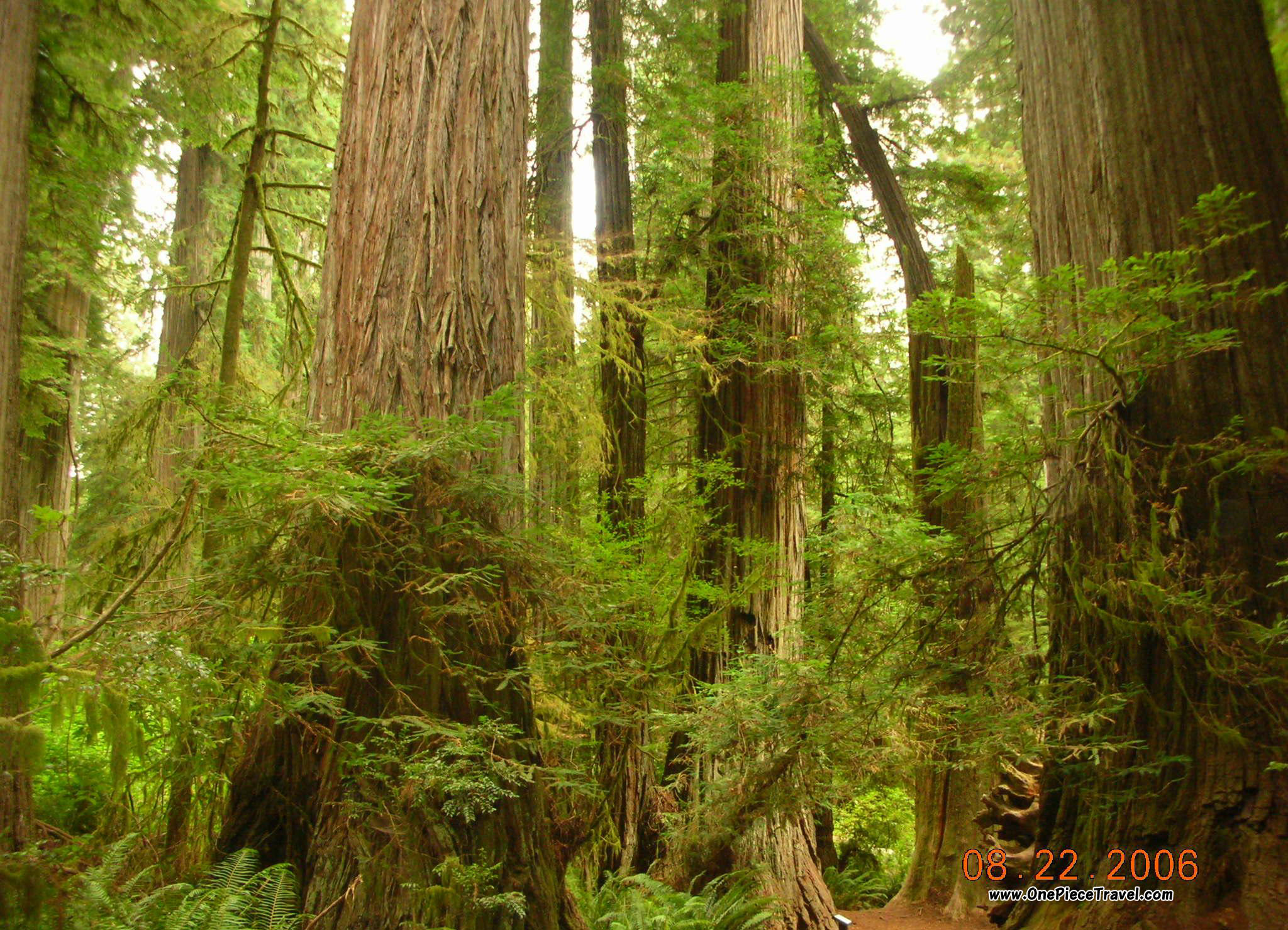 Redwood National Park attractions