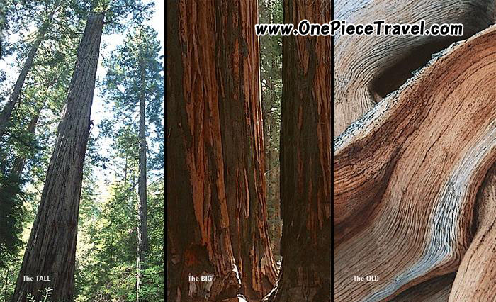 Sequoia National Park attractions